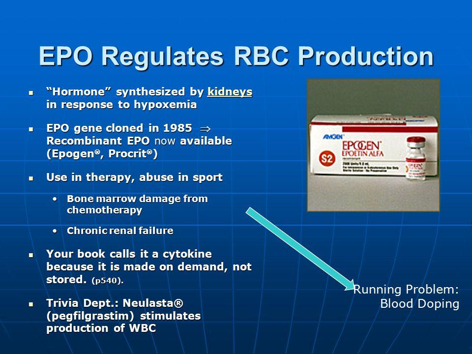 EPO Regulates RBC Production