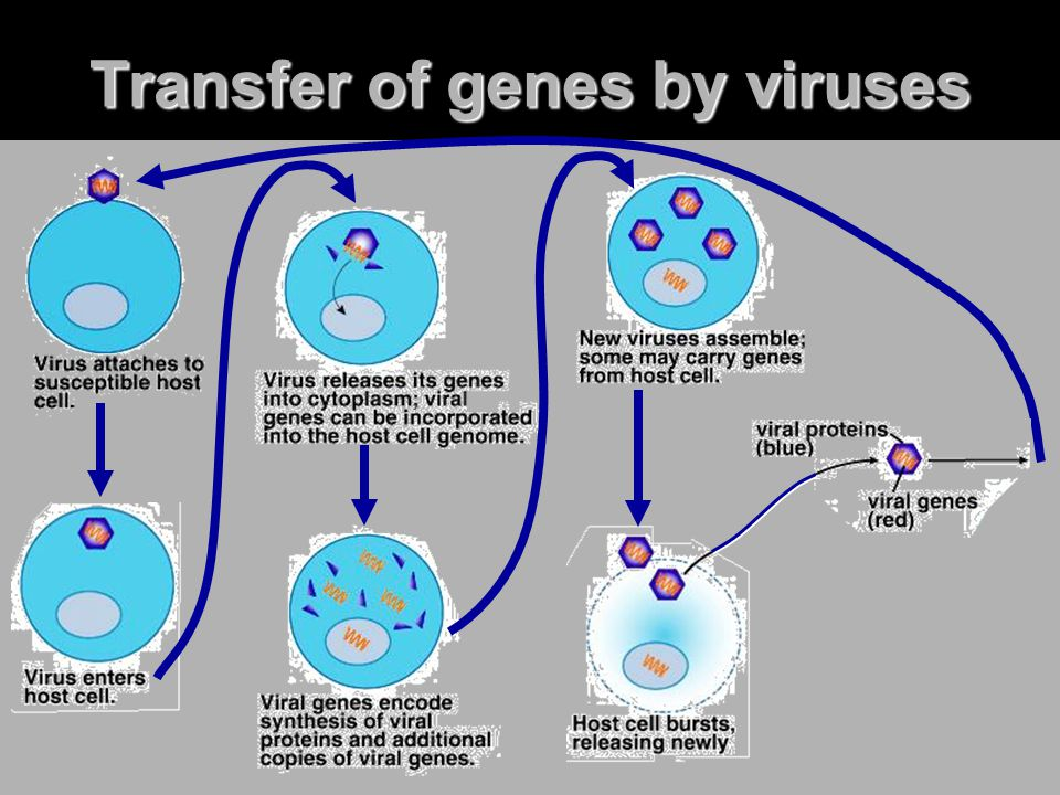 Transfer of genes by viruses