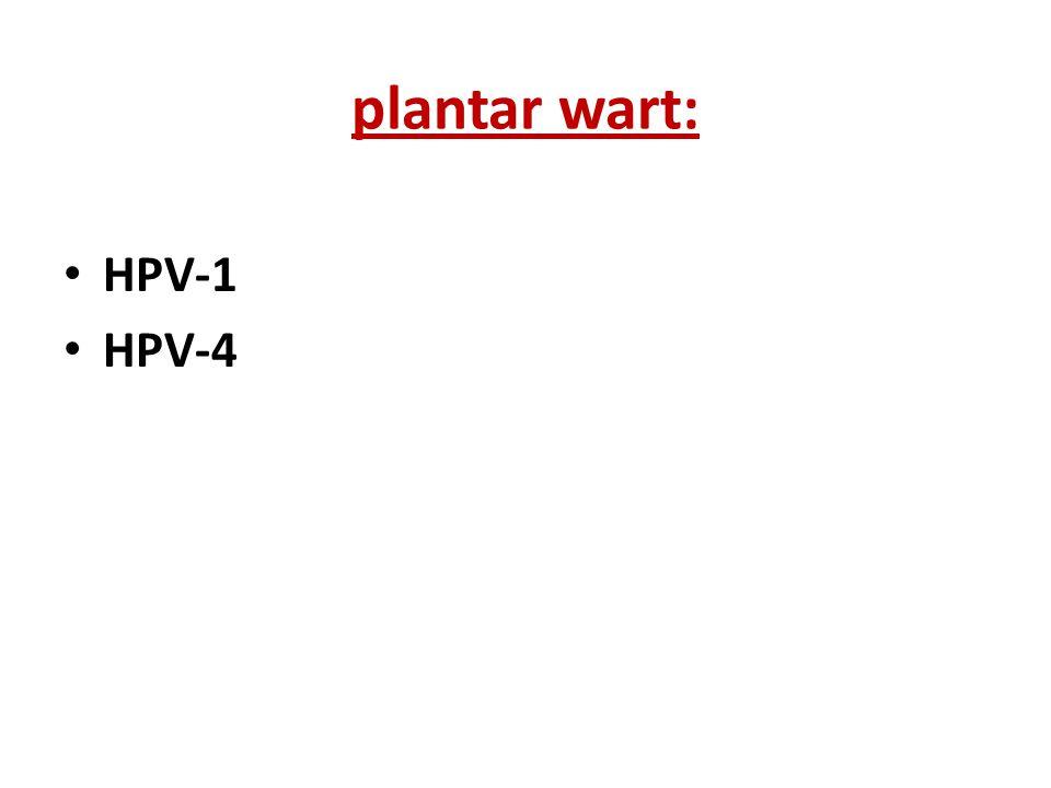 plantar wart: HPV-1 HPV-4