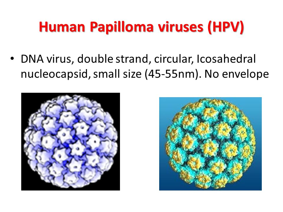 Human Papilloma viruses (HPV)
