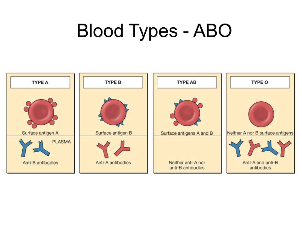 Blood Types - ABO