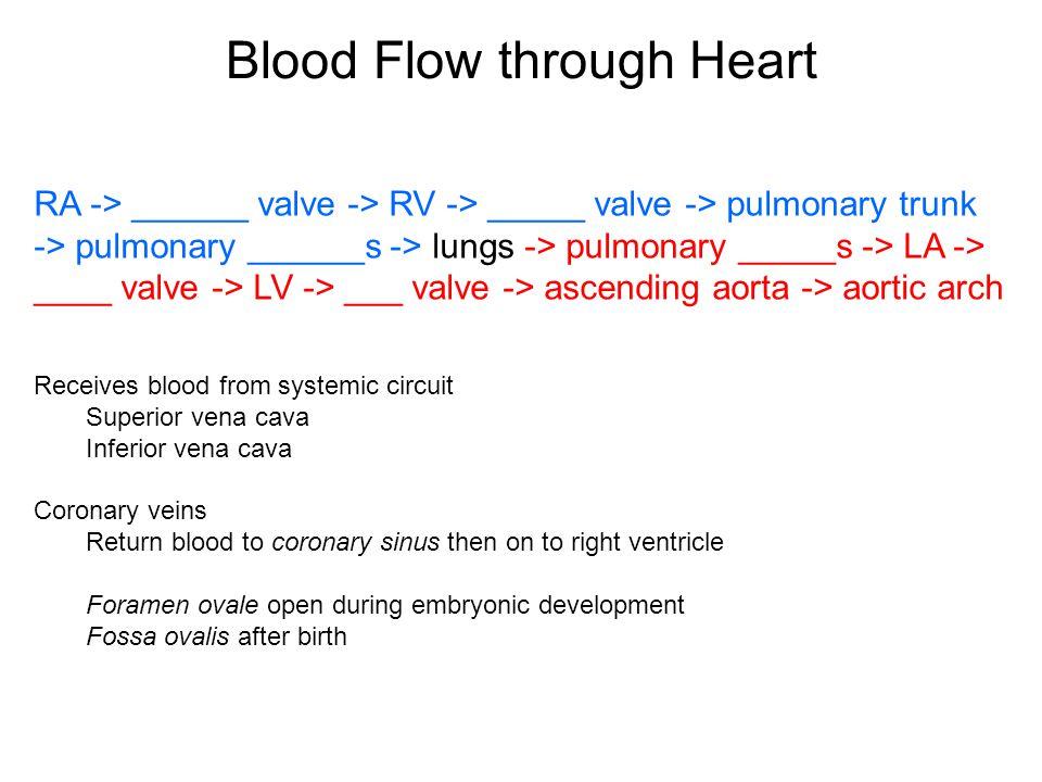 Blood Flow through Heart