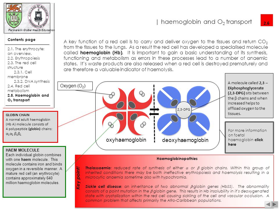 | haemoglobin and O2 transport