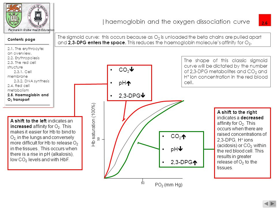 |haemoglobin and the oxygen dissociation curve