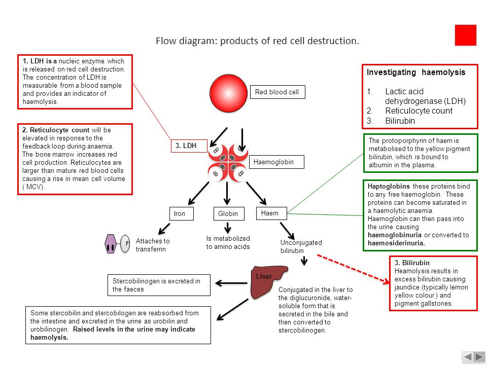 Flow diagram: products of red cell destruction.
