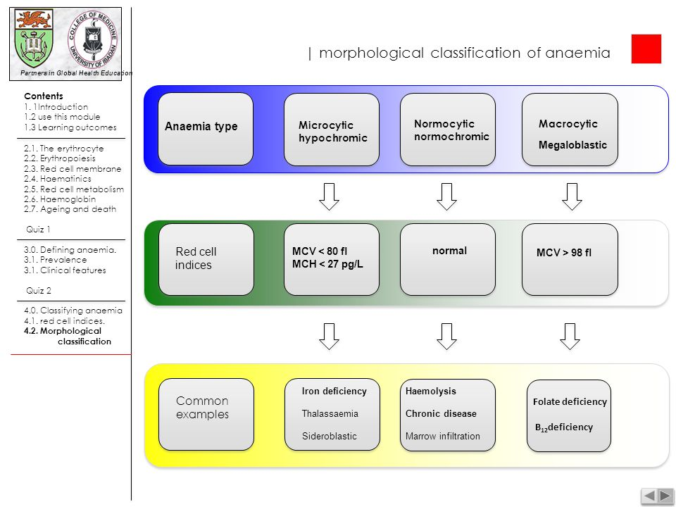 | morphological classification of anaemia