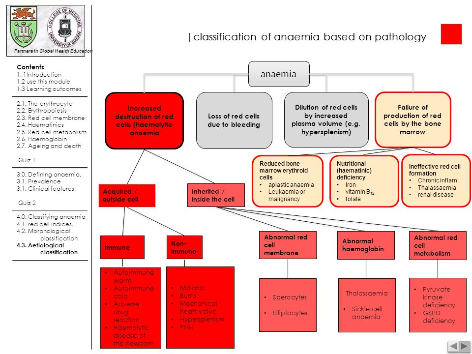 |classification of anaemia based on pathology