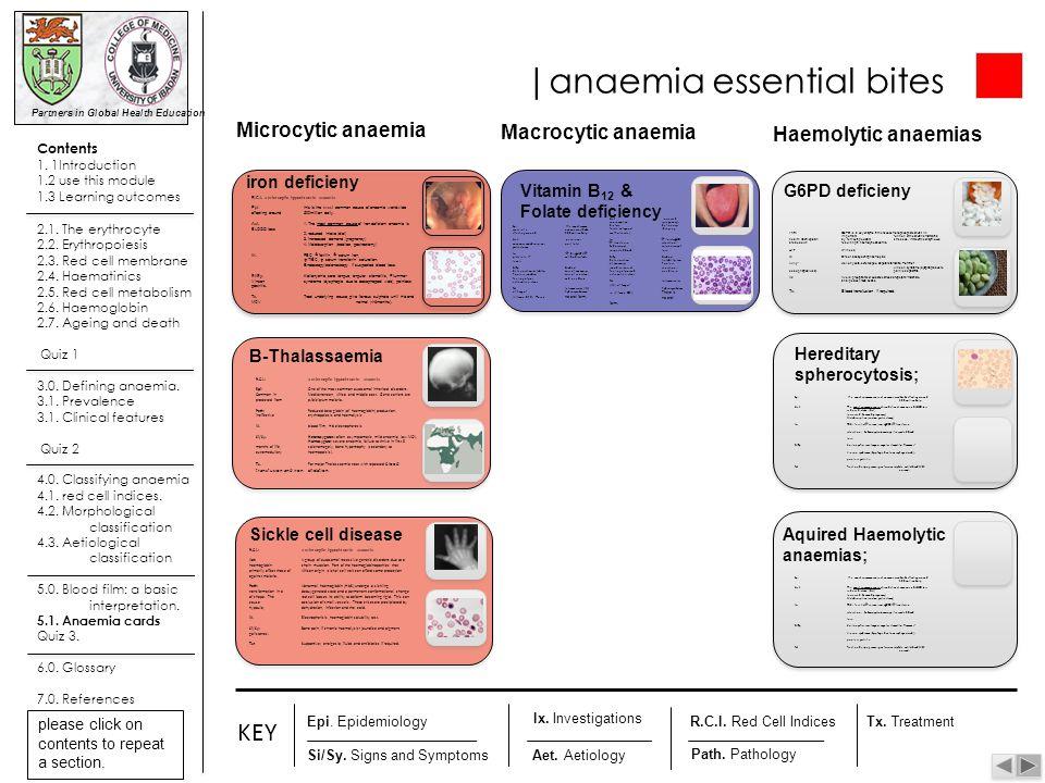 |anaemia essential bites