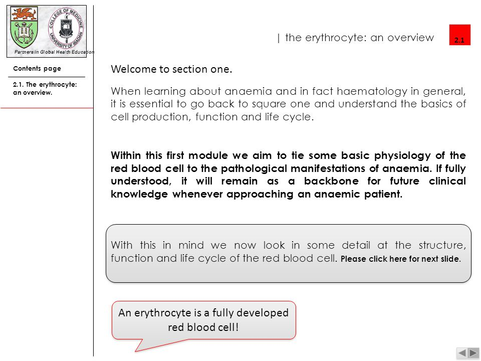 | the erythrocyte: an overview