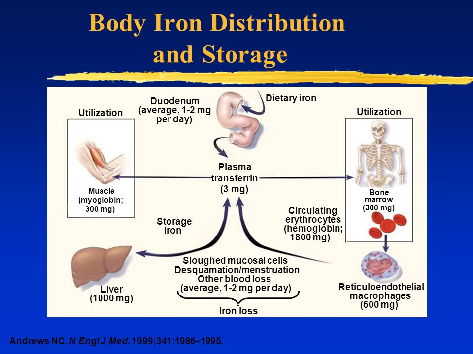 Body Iron Distribution and Storage