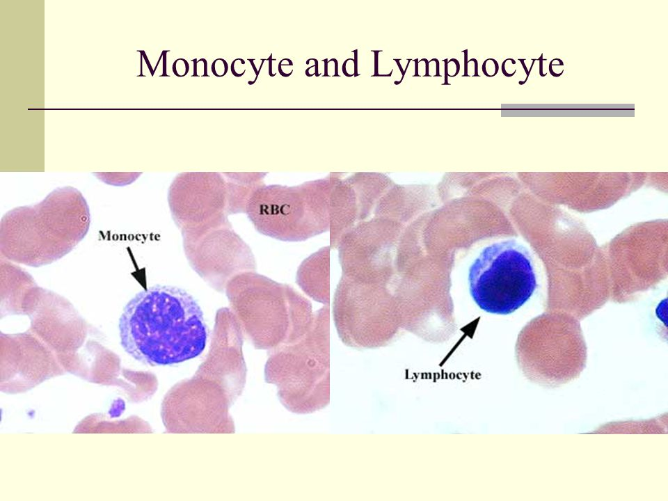 Monocyte and Lymphocyte