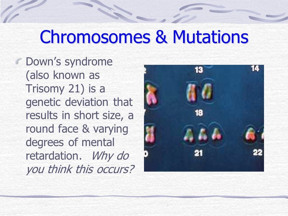 Chromosomes & Mutations