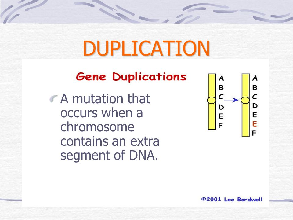 DUPLICATION A mutation that occurs when a chromosome contains an extra segment of DNA.