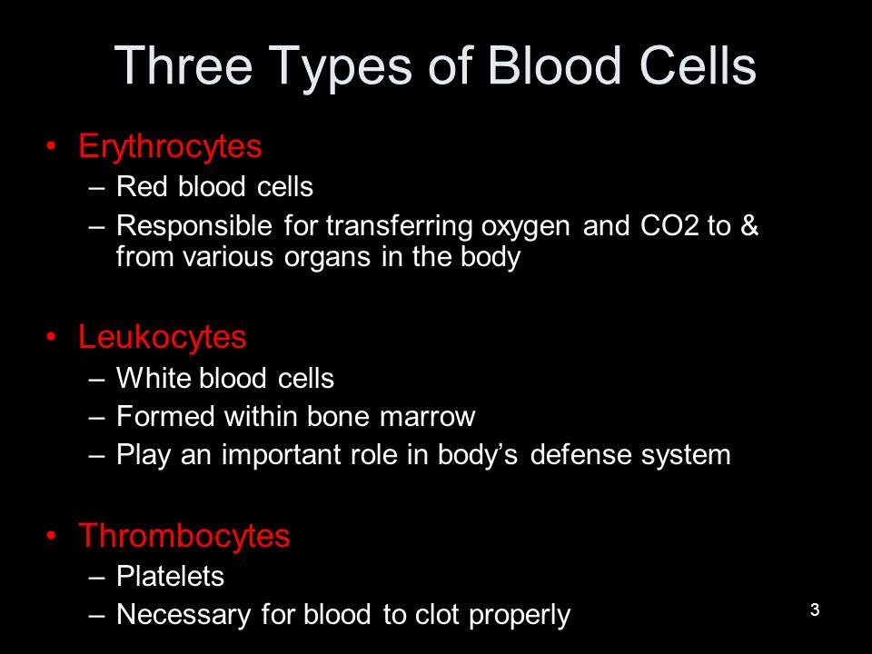 Three Types of Blood Cells