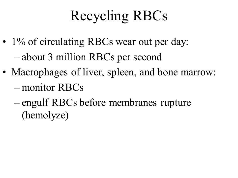 Recycling RBCs 1% of circulating RBCs wear out per day: