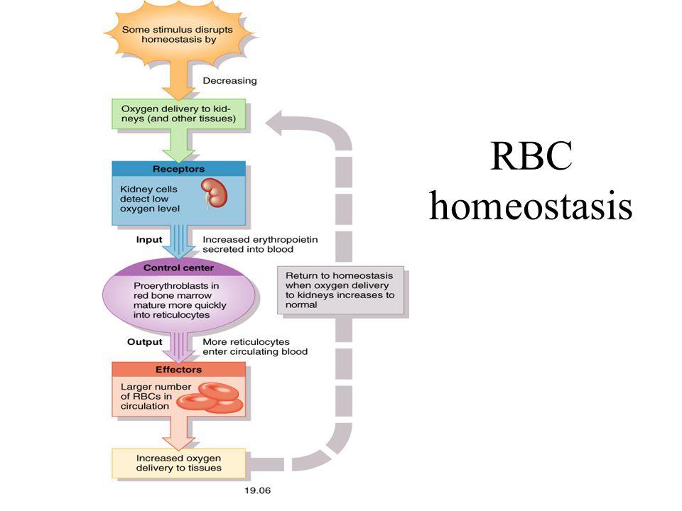 RBC homeostasis