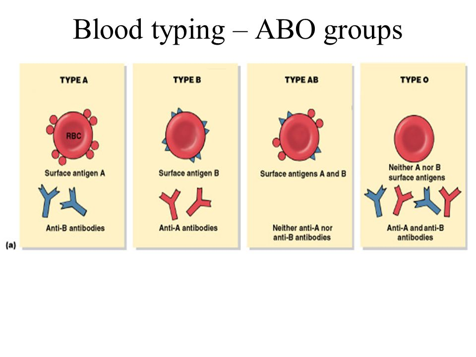 Blood typing – ABO groups
