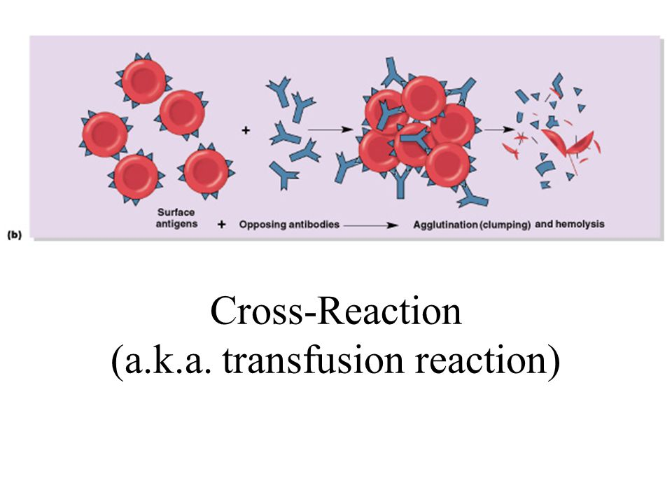 Cross-Reaction (a.k.a. transfusion reaction)