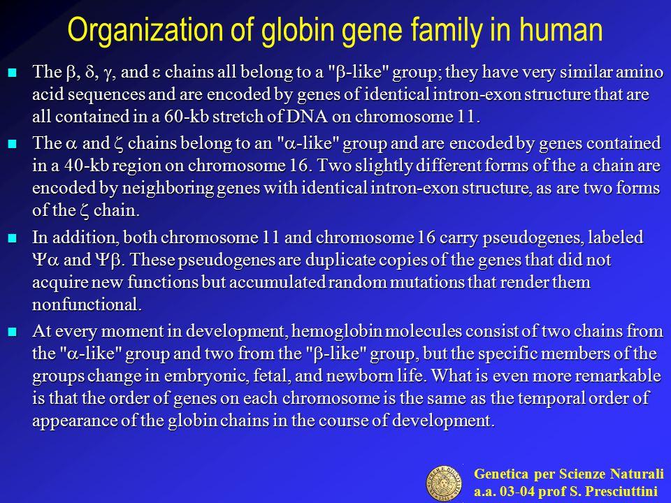 Organization of globin gene family in human