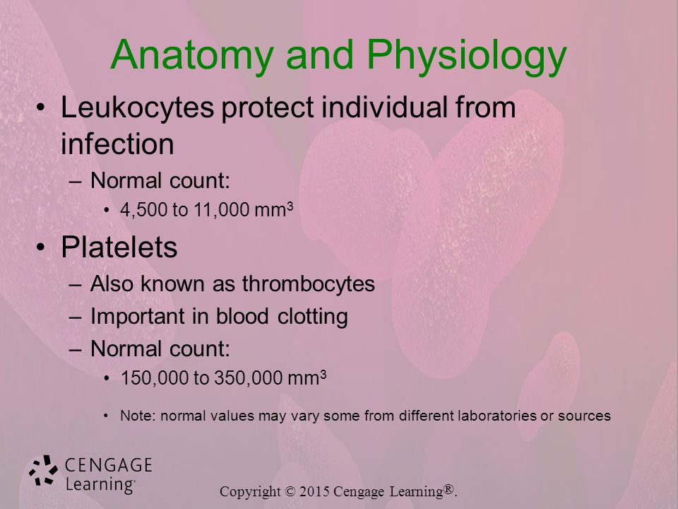 Blood and Blood-Forming Organs Diseases and Disorders - ppt video ...