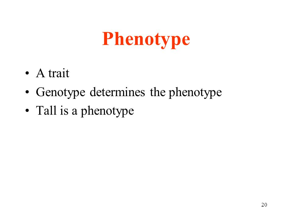 Phenotype A trait Genotype determines the phenotype