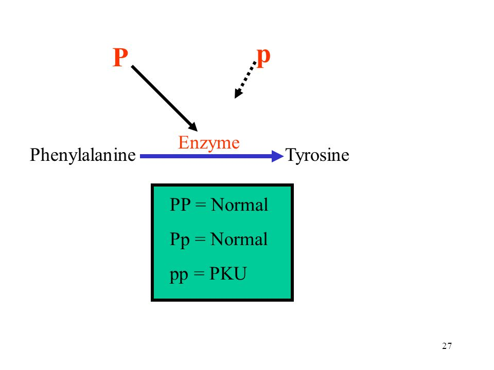 p P Enzyme Phenylalanine Tyrosine PP = Normal Pp = Normal pp = PKU