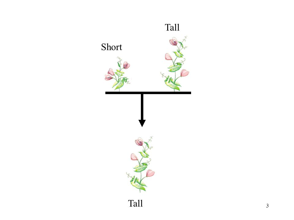 Tall Short Tall