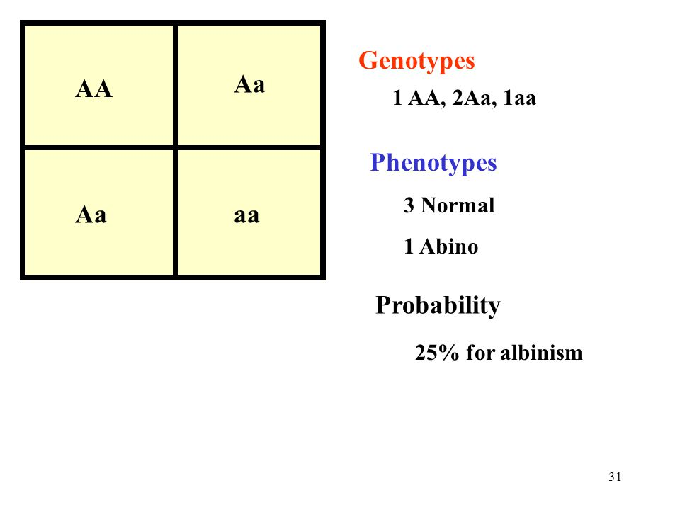 AA Aa aa Genotypes Phenotypes Probability 1 AA, 2Aa, 1aa 3 Normal