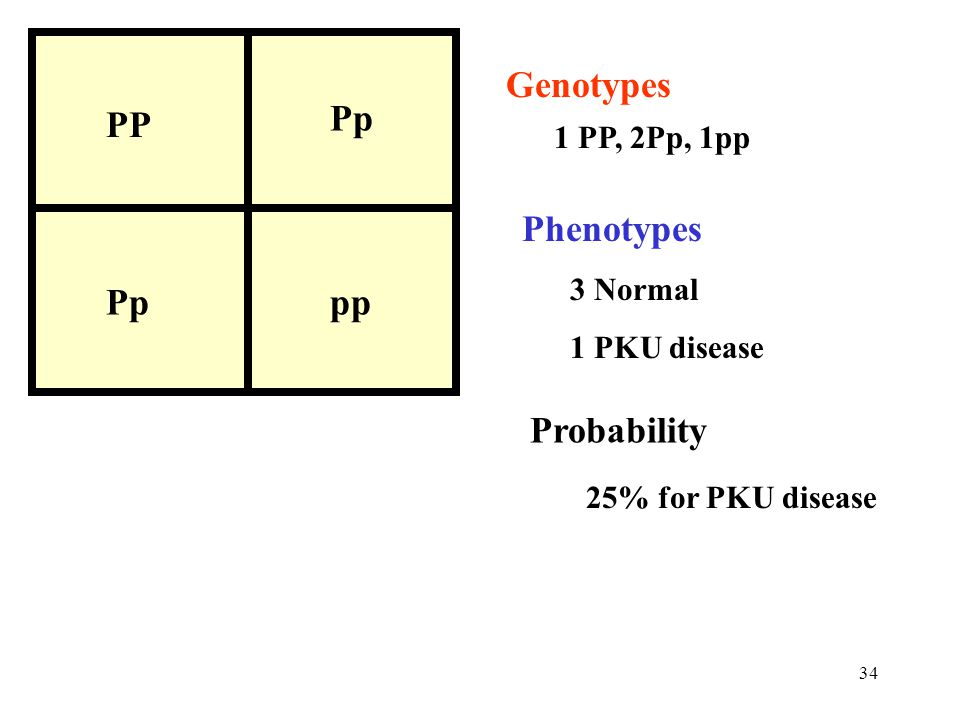 PP Pp pp Genotypes Phenotypes Probability 1 PP, 2Pp, 1pp 3 Normal