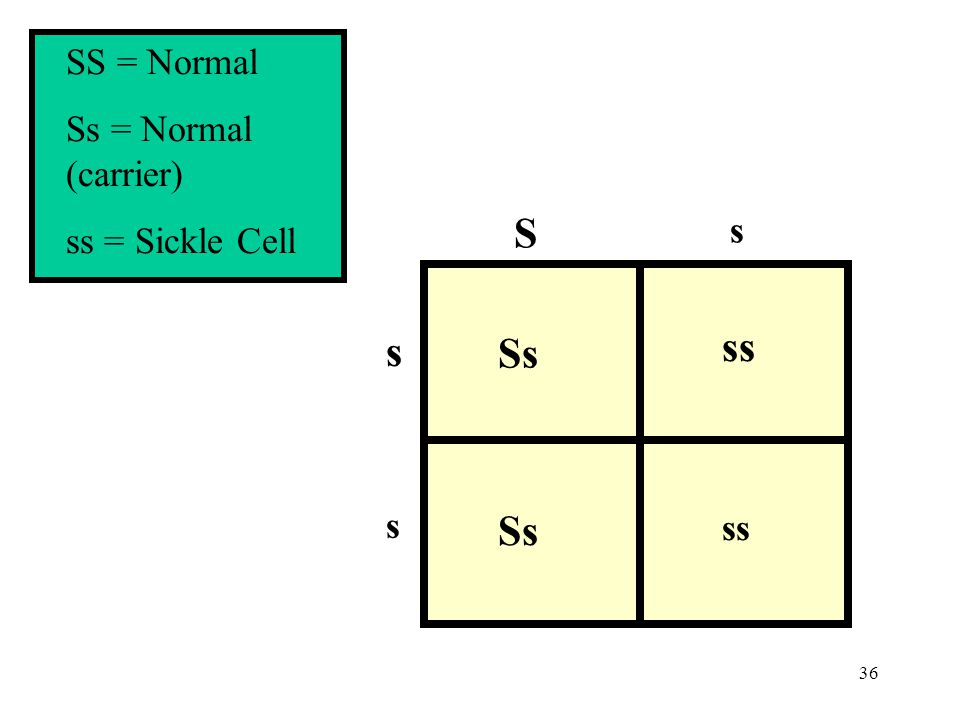 SS = Normal Ss = Normal (carrier) ss = Sickle Cell S s s Ss ss s