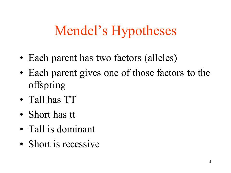Mendel's Hypotheses Each parent has two factors (alleles)