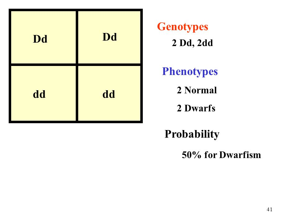 Genotypes Dd Phenotypes dd Probability 2 Dd, 2dd 2 Normal 2 Dwarfs