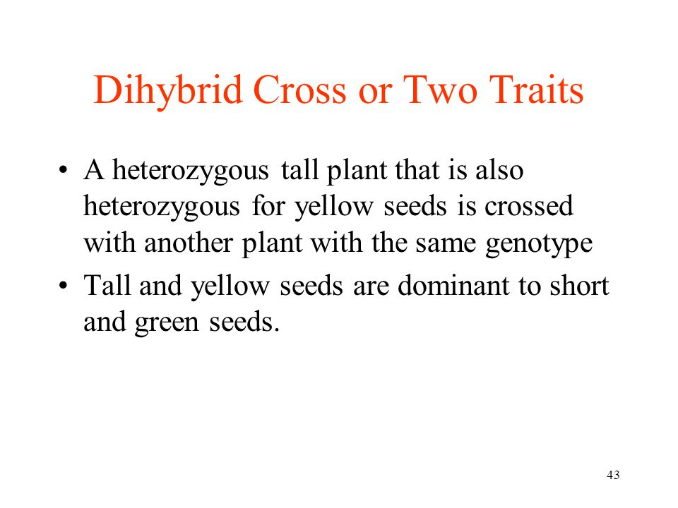 Dihybrid Cross or Two Traits