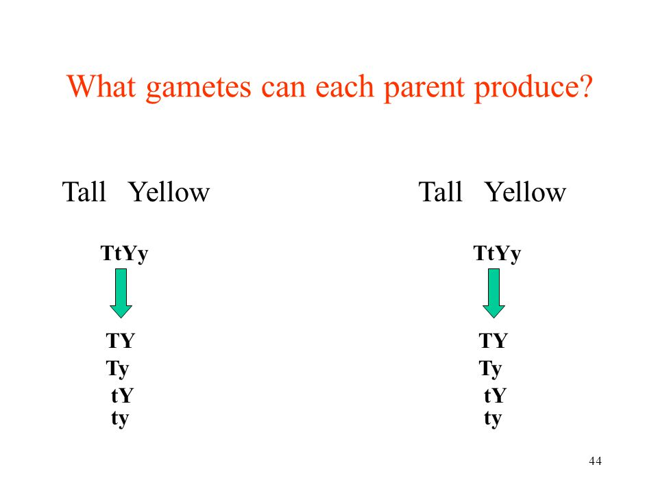 What gametes can each parent produce