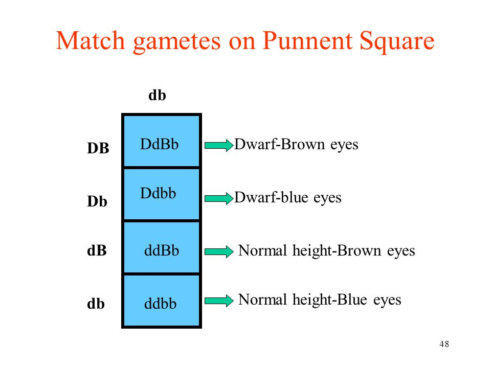 Match gametes on Punnent Square