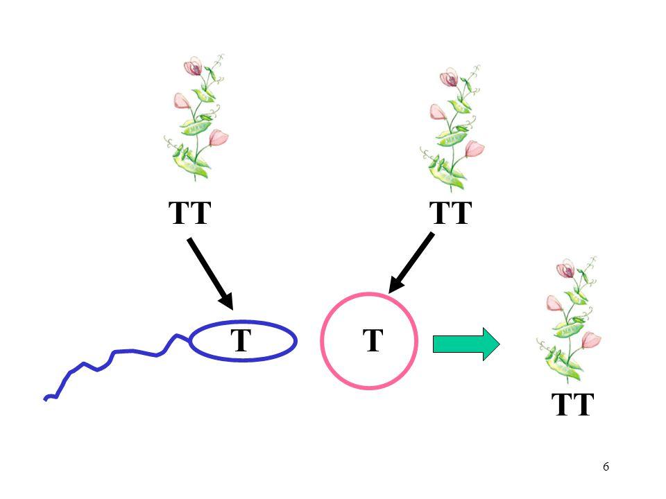 TT TT TT T T
