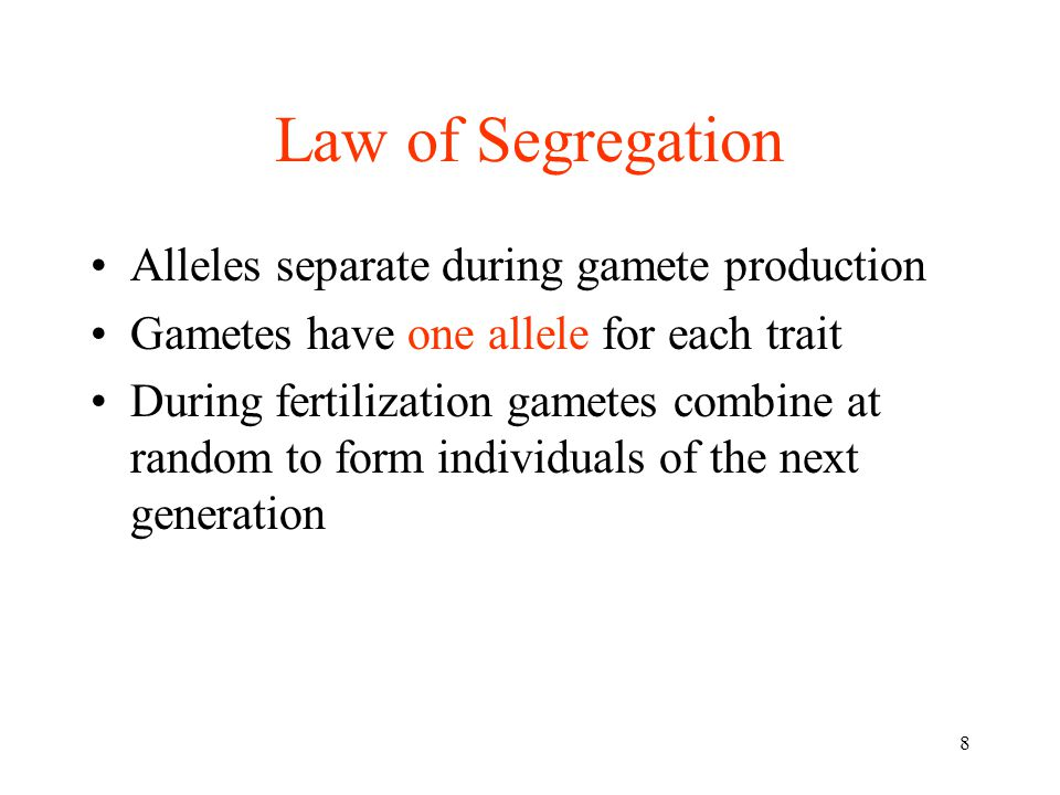 Law of Segregation Alleles separate during gamete production