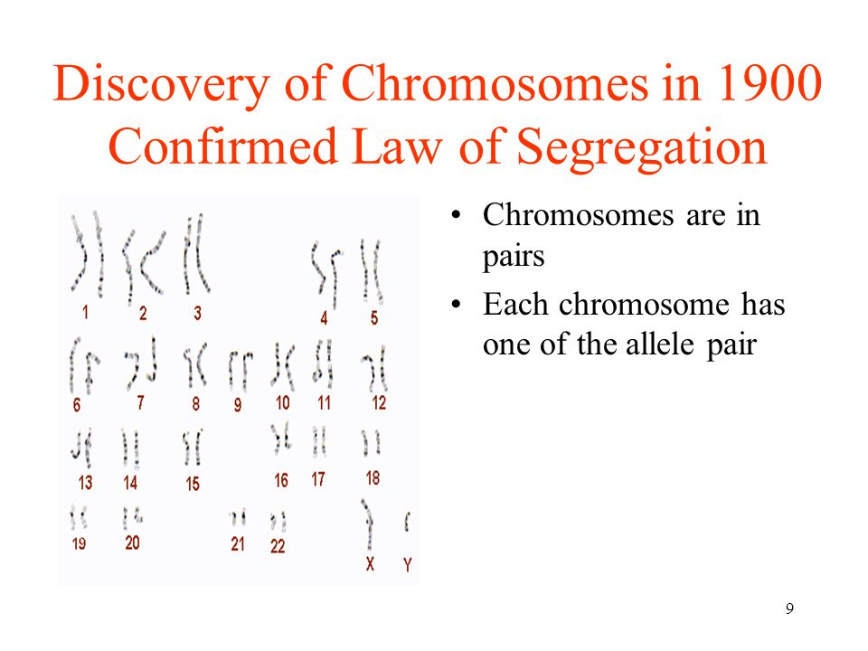 Discovery of Chromosomes in 1900 Confirmed Law of Segregation