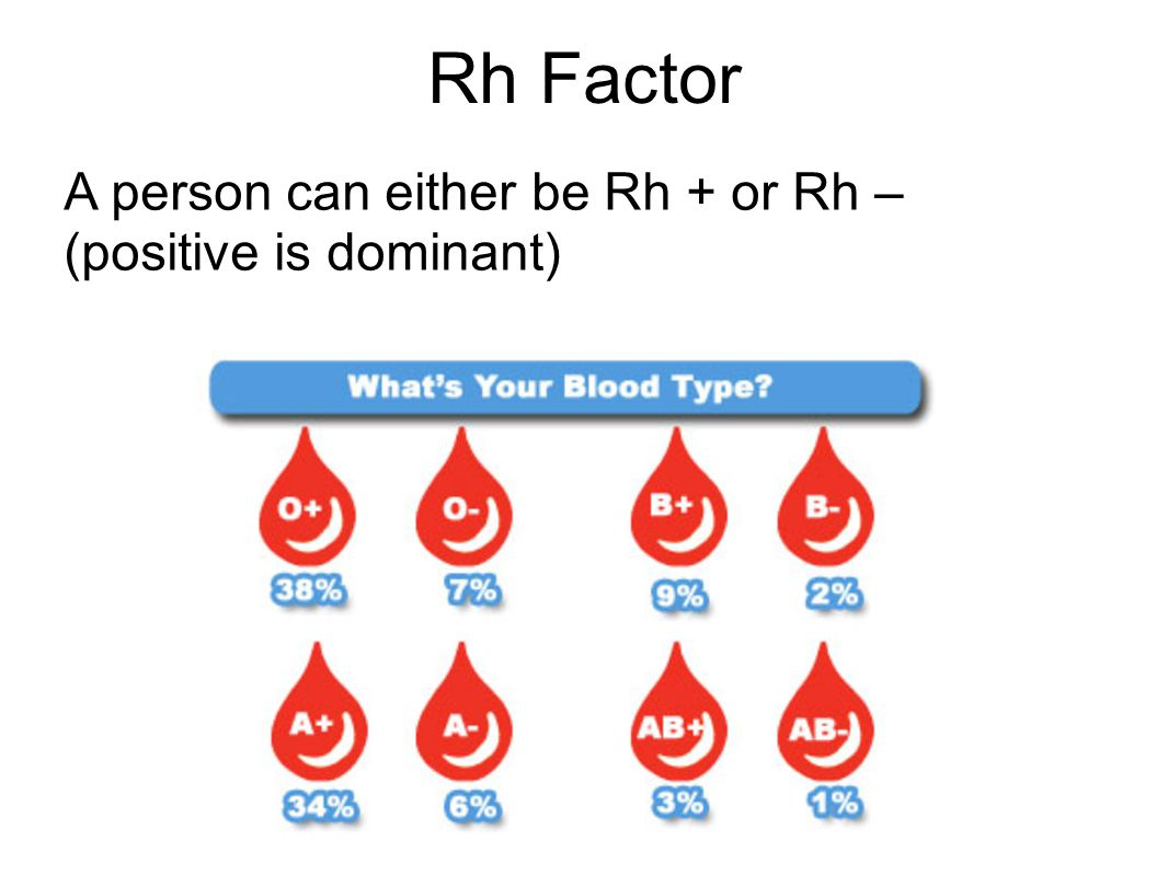 Rh Factor A person can either be Rh + or Rh – (positive is dominant)