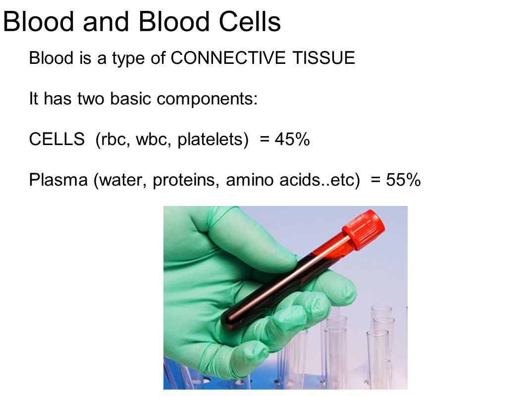 Blood and Blood Cells Blood is a type of CONNECTIVE TISSUE
