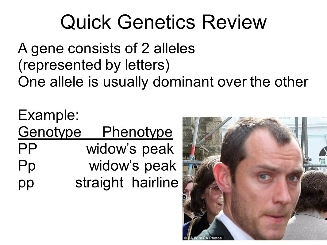 Quick Genetics Review A gene consists of 2 alleles (represented by letters) One allele is usually dominant over the other.