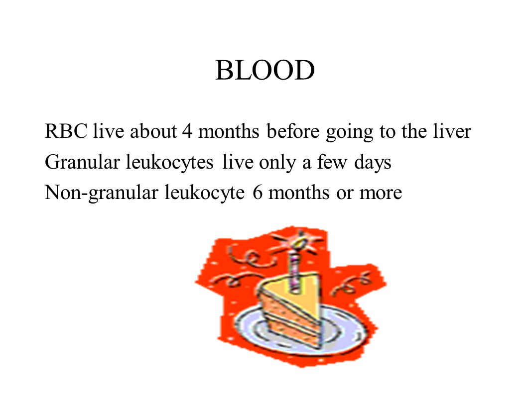 BLOOD RBC live about 4 months before going to the liver Granular leukocytes live only a few days Non-granular leukocyte 6 months or more