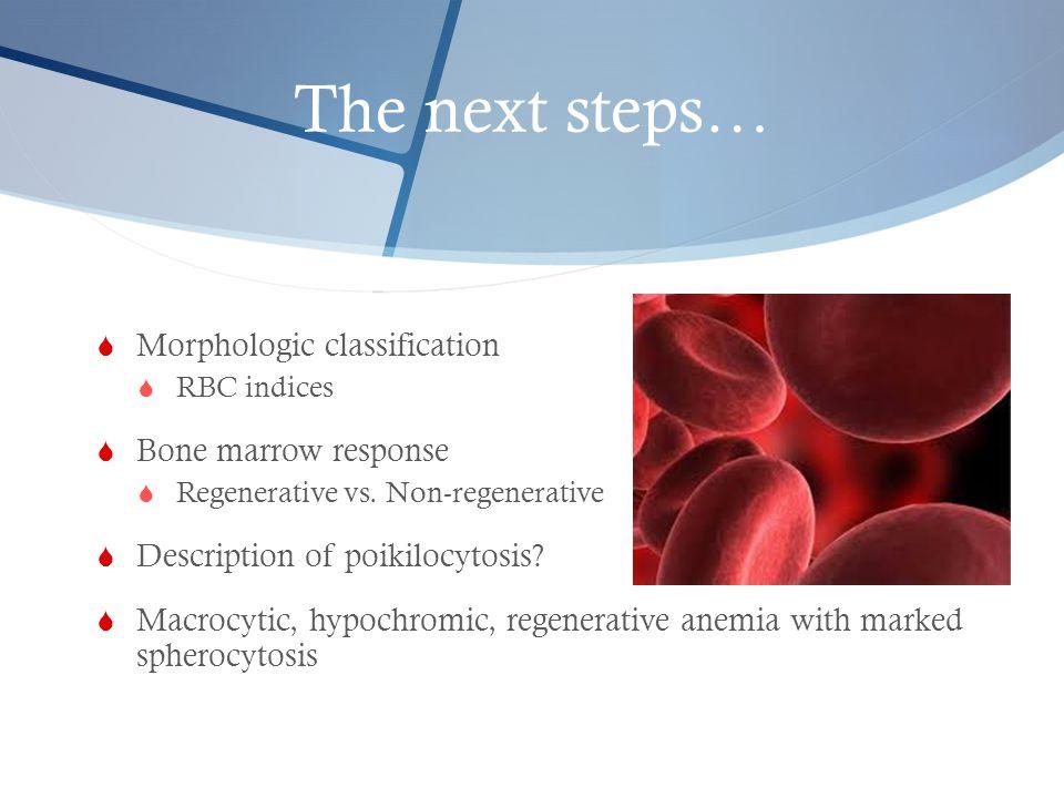 The next steps… Morphologic classification Bone marrow response