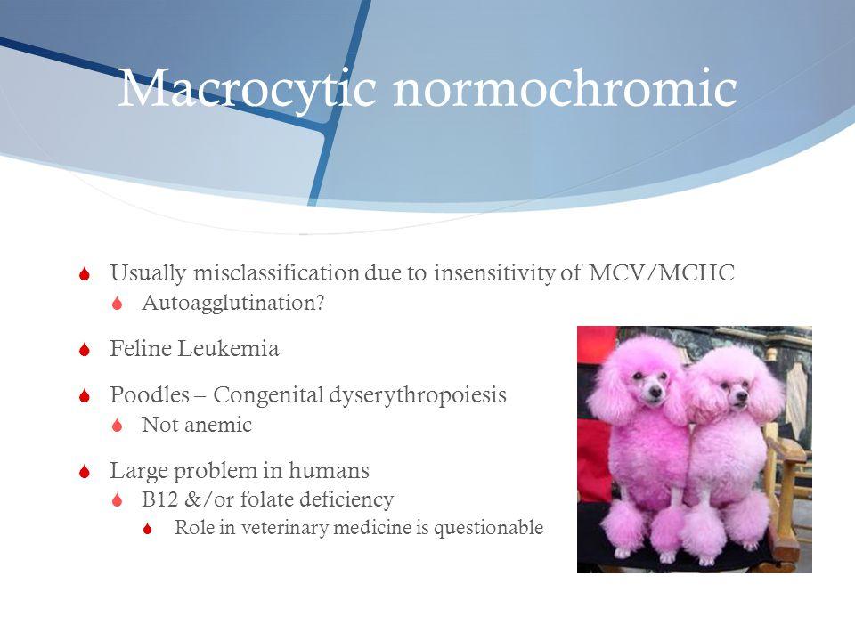 Macrocytic normochromic