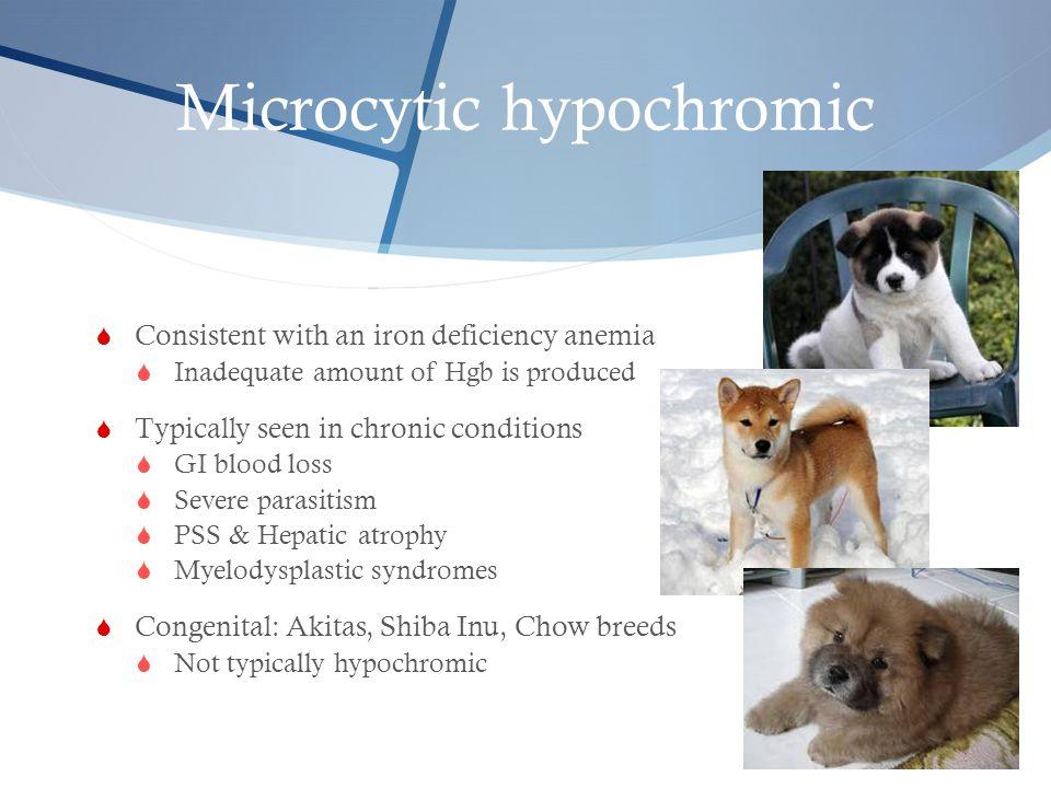 Microcytic hypochromic