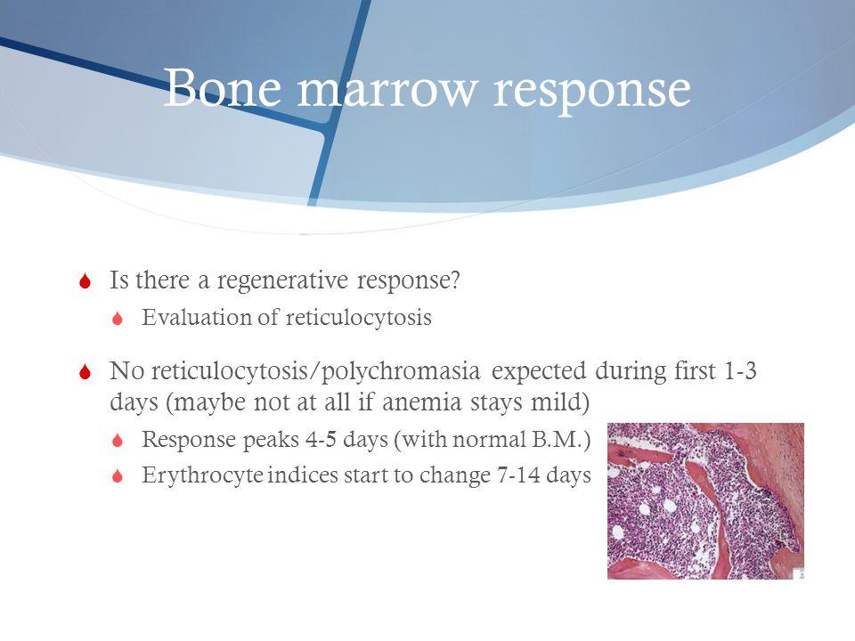 Bone marrow response Is there a regenerative response