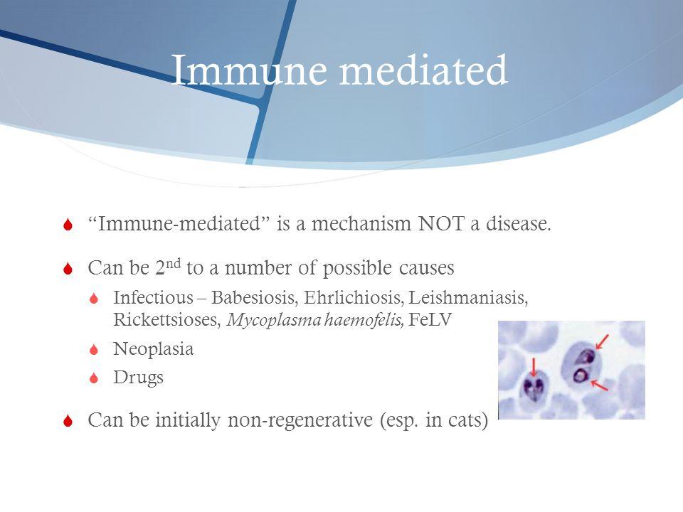 Immune mediated Immune-mediated is a mechanism NOT a disease.