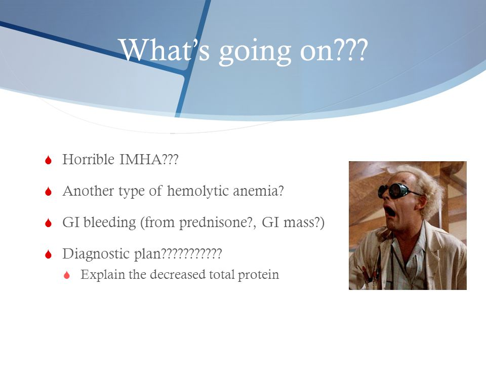 What's going on Horrible IMHA Another type of hemolytic anemia