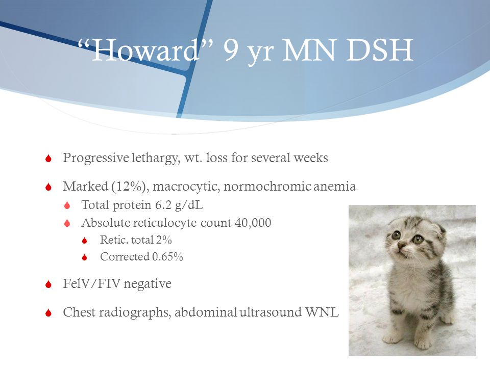 Howard 9 yr MN DSH Progressive lethargy, wt. loss for several weeks