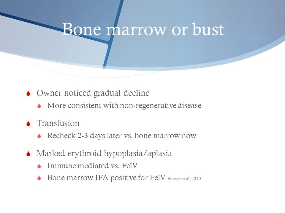 Bone marrow or bust Owner noticed gradual decline Transfusion